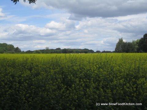 Tracklements Mustard Field