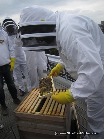 Magners Bee Aid
