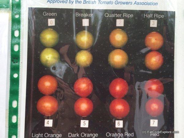 the tomato stall (46)