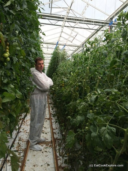 Isle of Wight tomatoes Greenhouses