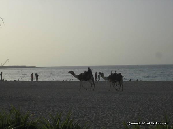 Camels on the beach Dubai