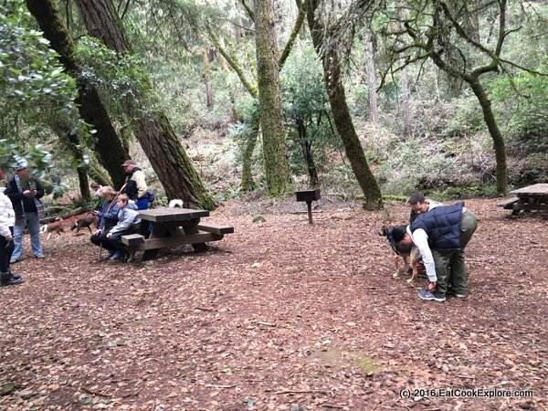 Picnicking on Laurel Dell on Mount Tam