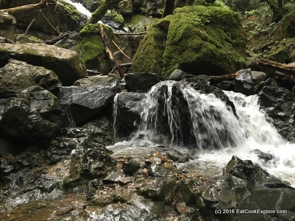 Bay Area Day Out: Hiking in Mount Tamalpais Marin County