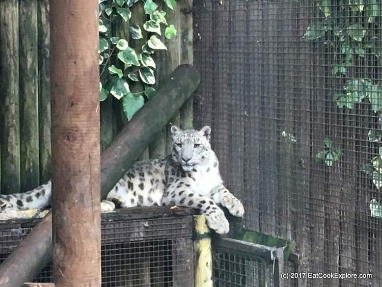 Paradise Wildlife Park Snow Leopard