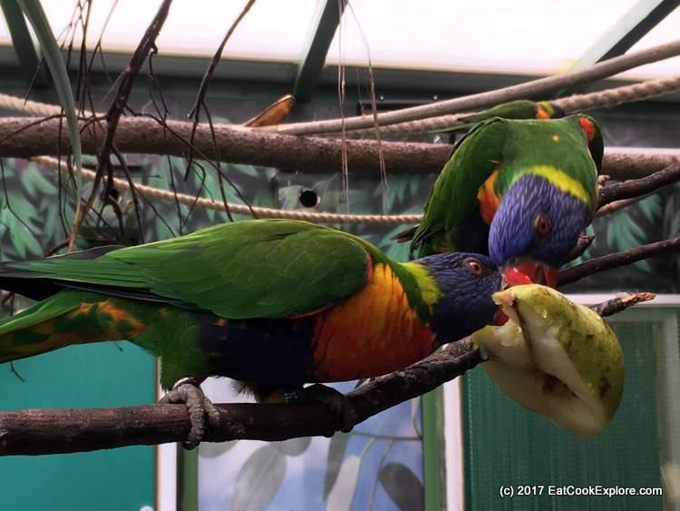 Paradise Wildlife Park Lorakeets