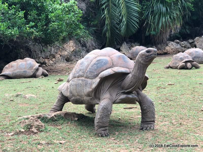 Giant Tortoise Reserve at Francois Leguat
