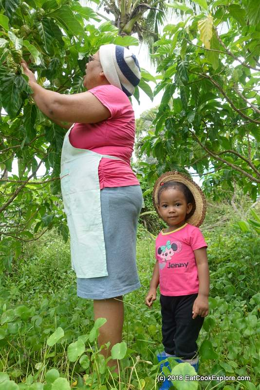 Delly Manan picking Noni fruit from her garden with her grand daughter