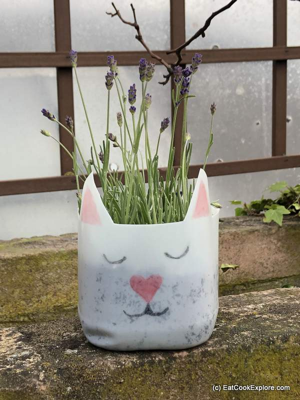 Milk bottle planter - cute cat filled with herbs